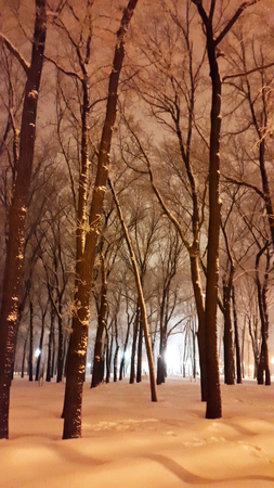 evening in Kharkiv winter park with a lot of snow
