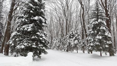 snow park in Kharkiv - winter in Ukraine