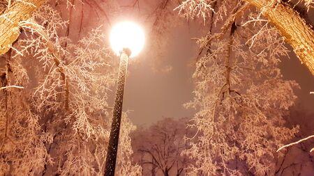 bright lamp in park in winter - Kharkiv in January 2017