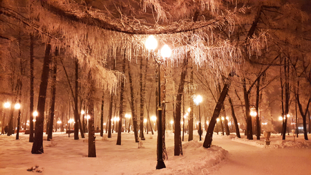 white branches of trees in winter and streetlight Stock Photo