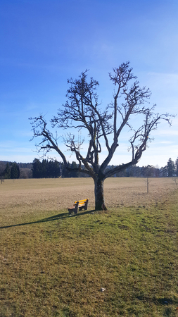 yellow bench and old naked tree on meadow near Albstadt in Baden-Wurttemberg Stock Photo