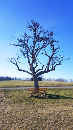 yellow bench in front of old naked tree on meadow near Albstadt in Baden-Wurttemberg Stock Photo - 98792483