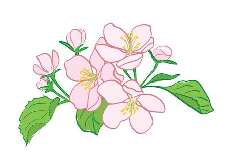 rosy vector apple-tree flowers bouquet Stock Vector - 104677059