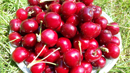 sweet red cherries closeup Stock Photo - 105148257