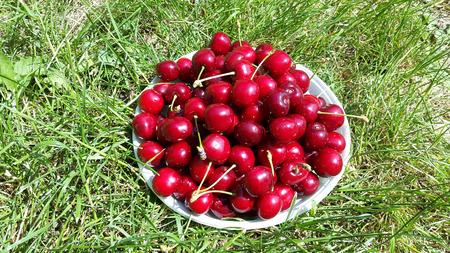 dark red sweet cherries on white plate in the garden Stock Photo - 106303247