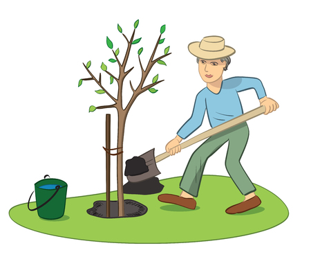 man planting young tree with green leaves - spring work in garden Illustration