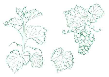 grapes with leaves - contour vector set