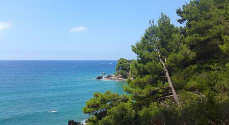 aquamarine water of Adriatic sea and green pines in Montenegro