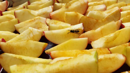 apples sliced and drying on air and wasp