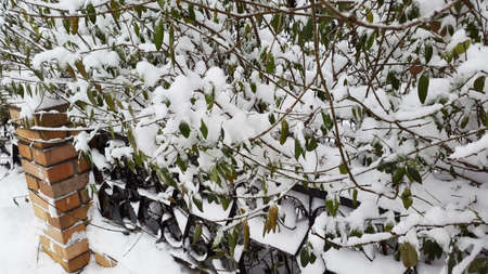 green leaves with snow - winter came
