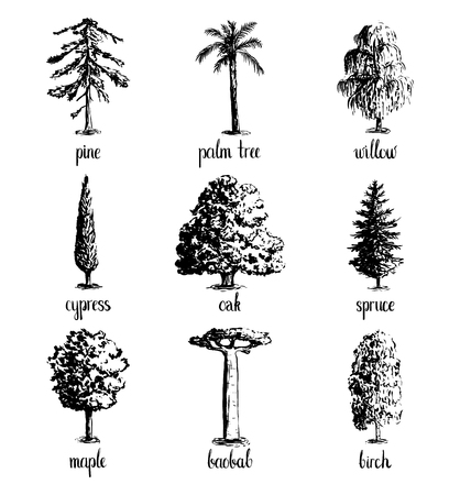 Set of hand drawn tree sketches - oak, palm tree, willow, pine, cypress, baobab, birtch maple spruce