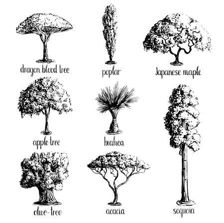 Ensemble de croquis d'arbres dessinés à la main -APPLE arbre, olive, érable japonais, acacia, Brahea, peuplier, séquoia, sang de dragon. Noir silhouettes isolé sur fond blanc