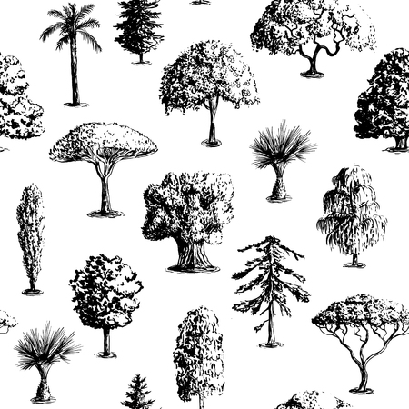 cypress: Seamless vector hand drawn tree pattern. Oak, olive, apple-tree, pine, spruce, maple, dragon blood, brahea, cypress, acacia, palm.