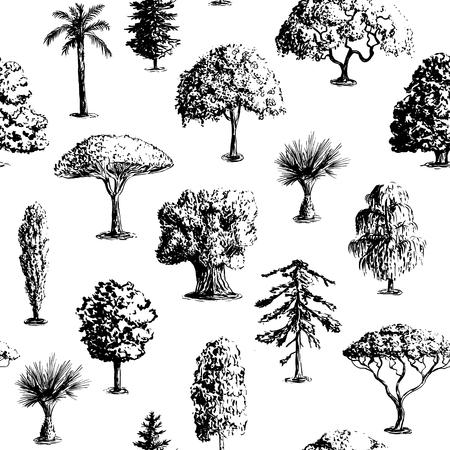 cypress tree: Seamless vector hand drawn tree pattern. Oak, olive, apple-tree, pine, spruce, maple, dragon blood, brahea, cypress, acacia, palm.