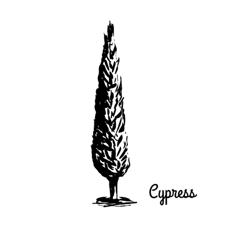 Black silhouette of Cypress isolated on white layout.