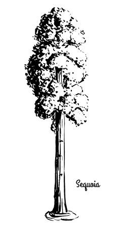 Black silhouette sketch illustration of sequoia.
