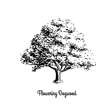 Vector sketch illustration of Flowering Dogwood. Black silhouette of tree isolated on white background. Official state tree of Missouri and Virginia.