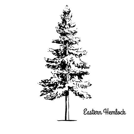 벡터 스케치 그림입니다. 동부 또는 캐나다 독 당 흰 배경에 고립의 검은 실루엣. 구과 맺는 Tsuga Canadensis, 펜실베니아 주 나무의 그리기.