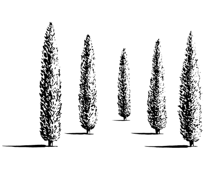 Set of Mediterranian, Italian or Tuscan cypresses illustration. Valley of trees of different sizes. Black sihlouette of coniferous evergreen Pencil pine isolated on white background.