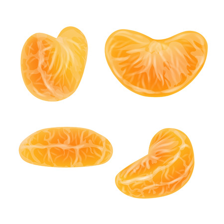 Set of realistic mandarin or tangerine slices. Isolated peeled citrus segments on white background. Orange sections. Photorealistic vector illustration.