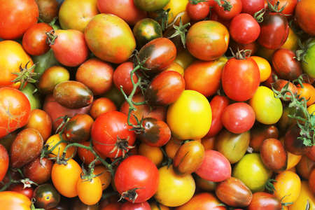 Background from a tomato. Tomatoes of different colors. Fresh vegetables. Harvested tomato