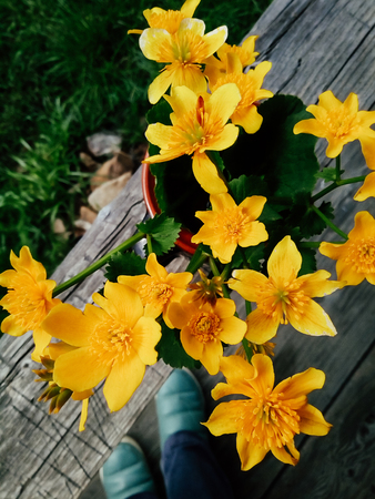 Yellow fresh wild flowers in a clay jug, on wooden veranda background in summer garden. Daylight. Still life in rustic style. Countryside lifestyle, vacation concept. Selective focus close up Top view