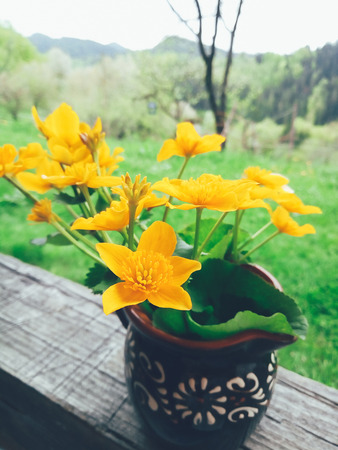 Yellow fresh wild flowers in a clay jug, on wooden veranda background in summer garden. Daylight. Still life in rustic style. Countryside lifestyle, vacation concept. Selective focus close up Standard-Bild