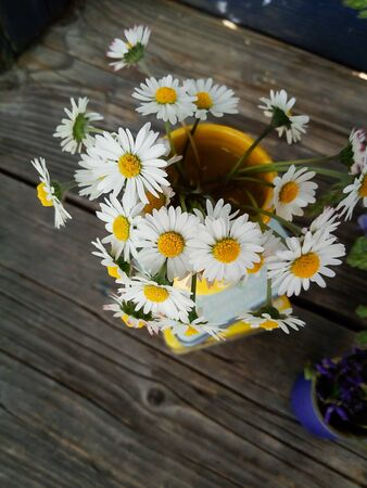 daisy fresh wild flowers in yellow ceramic vase, on wooden blue veranda background. Still life in rustic style. Close up Top view. Summer in garden, countryside lifestyle concept