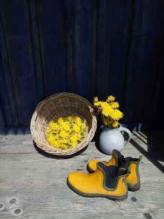 Yellow fresh dandelion flowers in blue clay jug, wicker, big wild flowers, rubber boots on wooden veranda background in summer garden. Daylight. Still life in rustic style. Countryside lifestyle concept