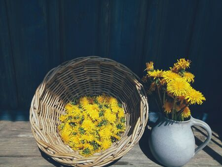 Yellow fresh dandelion flowers in blue clay jug, and wicker, big wild flowers, on wooden veranda background in summer garden. Daylight. Still life in rustic style. Countryside lifestyle concept