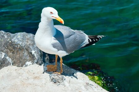 Seagull sitting on the rock and looking curiously at camera, blue water in the background. Feed birds. Close up view. Copy space. Travel, vacation, freedom concept 스톡 콘텐츠