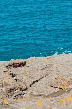 Empty beer bottles left after party on the rocky beach, blue sea background. Social issue of human lack of responsibility. Ecosystem, environment pollution global problem. Marine life cleanup