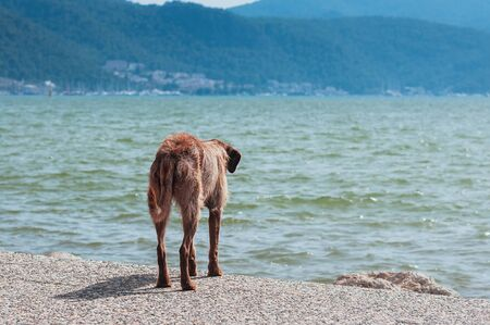 Stray dog watching the summer sea view from the beach. Lonely animal looking from friend or master. Find a friend, Freedom, loneliness, loss concept. Feed hungry street animals. Copy space