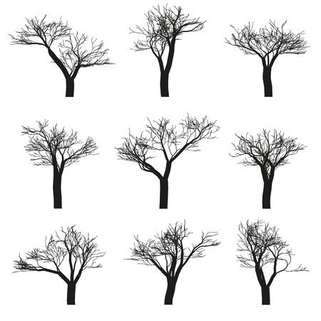 白地に葉のない 9 落葉樹のセットです。ベクトル、孤立したオブジェクト  イラスト・ベクター素材