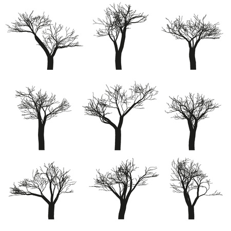 Set of nine deciduous trees with no leaves on a white background. Vector, isolated objects