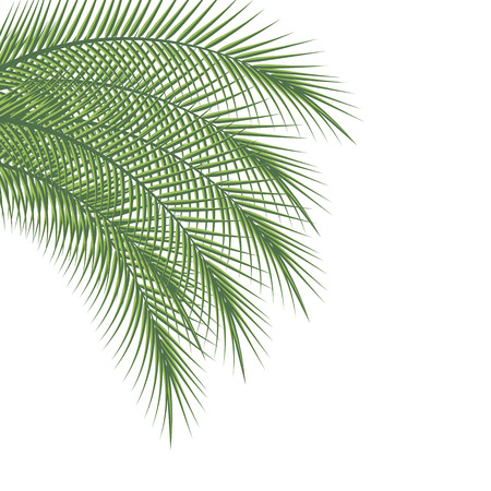 Branches of palm trees on a white background, vector illustration Illustration