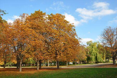 Vecchi castagni con foglie d'oro nel parco cittadino nella soleggiata giornata autunnale