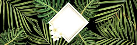 Tropical leaves. Jungle background flower and palm. Vector jungle illustration. Green tropical leaves banner.
