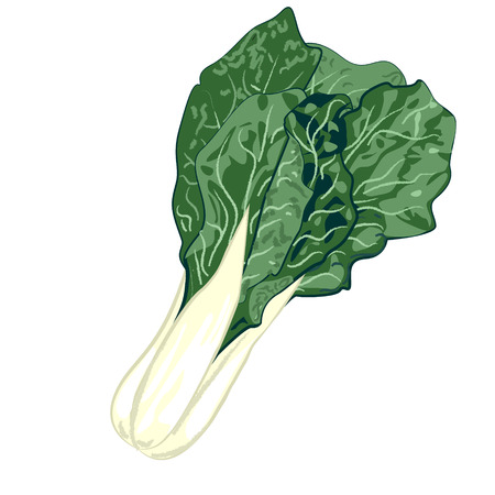 COLLARD GREENS on a white background vector illustration