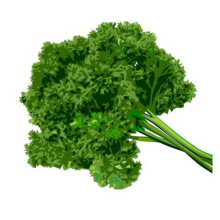 Bunch of parsley on a white background. Vector illustration