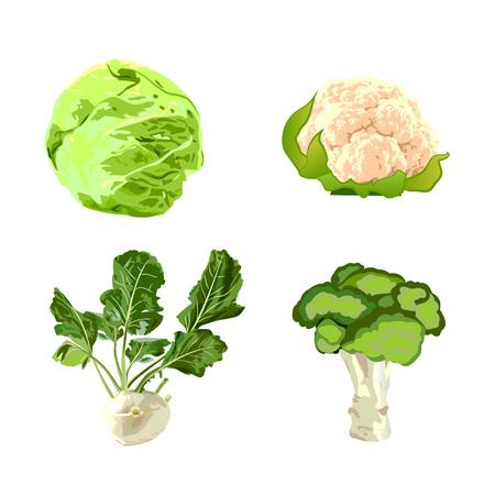 Set of cabbages vector illustration