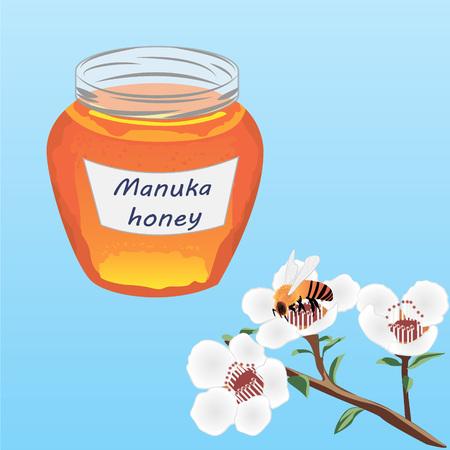 Manuka honey and A brunch of manuka blooming 向量圖像