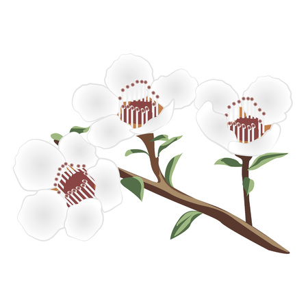 A brunch of manuka vector illustration