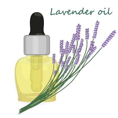 Lavender essential oil vector illustration Aromatherapy
