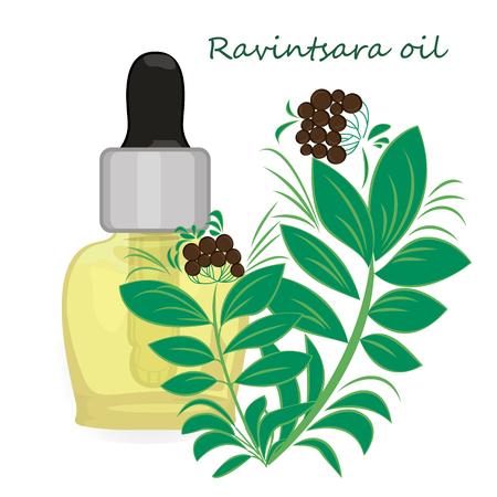 Ravintsara essential oil vector illustration Aromatherapy