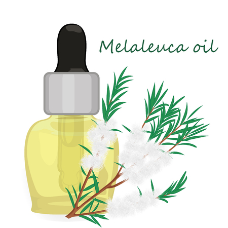 Melaleuca essential oil vector illustration Aromatherapy Illustration