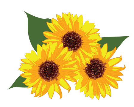 Sunflowers vector illustration on a white background isolated  イラスト・ベクター素材