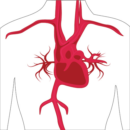Artery system in human body vector illustration