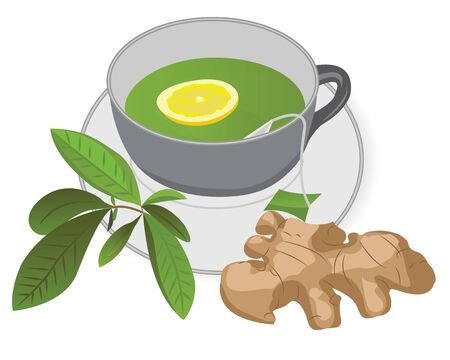 A cup of green tea with a ginger and a lemon, a tea brunch leaves vector illustration on a white background
