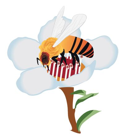 A bee on a blooming tree flower vector illustration on a white background isolated